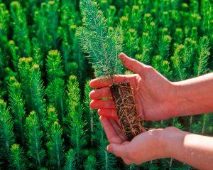 Zakładanie terenów zieleni