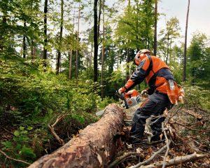 Wycinka drzew i zakrzaczeń